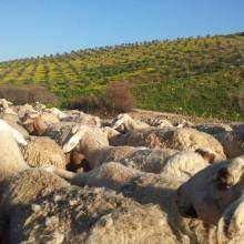 Der mozarabische Jakobsweg: Von Granada nach Cordoba