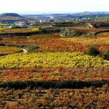 La Rioja, El Bierzo y Galicia visitando bodegas